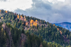 Mountain forest in autumn Stock Images