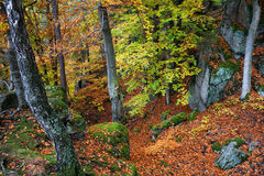 Mountain Forest in Autumn Royalty Free Stock Photo