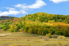 mountain forest in the autumn Stock Photo