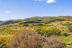 mountain forest in the autumn Royalty Free Stock Photography