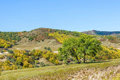 mountain forest in the autumn Stock Photography