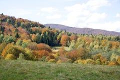 Mountain forest in autumn in Poland. (Bieszczady Mountains Stock Photo