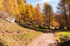 Mountain forest in autumn season Stock Image