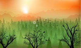 Mountain forest background at sunset Stock Image