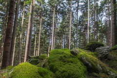 Mountain forest Royalty Free Stock Image