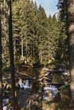 Mountain forest on carpathians. Mountain forest on carpathian mountains at summer time royalty free stock image