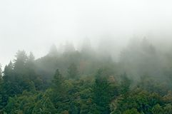 Mountain forest in clouds. Northern California stock photography