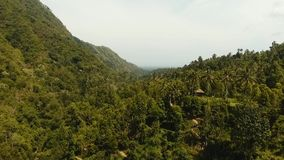 Rainforest in cloud, Bali,Indonesia. Mountain forest in the clouds. Mystical forest in the fog. Aerial view of over tropical rainforest in mountains with white stock footage