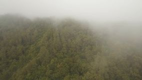 Rainforest in cloud, Bali,Indonesia. Mountain forest in the clouds. Mystical forest in the fog. Aerial view of over tropical rainforest in mountains with white stock video