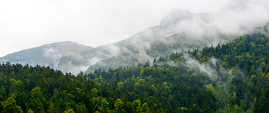 Mountain-Forest in cloudscape-Pyrenees France Royalty Free Stock Photo