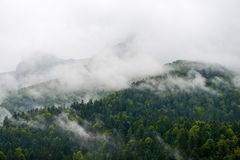 Mountain-Forest in cloudscape-Pyrenees France Royalty Free Stock Images