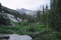 Mountain forest in Colorado Rocky mountains Stock Photography