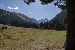 Mountain forest with coniferous, deciduous trees and glade, toward Maliovitza peak in Rila mountain. Bulgaria Royalty Free Stock Photo