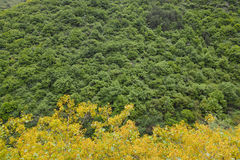 Mountain forest Royalty Free Stock Photo