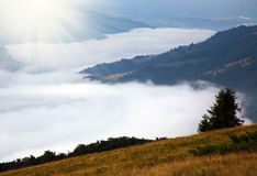 Mountain forest covered with cloud mist Stock Photo