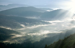 Mountain forest covered with mist, in the rays of sun Stock Photos
