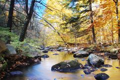 mountain forest creek stock images
