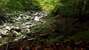 Mountain forest creek with slider moving footage stock video