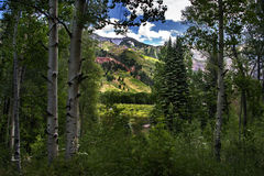 Mountain Forest, Dazzling Sky Telluride, Colorado. The San Juan Mountains of Telluride, Colorado are seen through a stand of Aspens and Pines Stock Photo