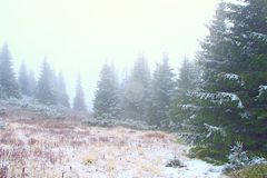 Mountain forest in dense fog after first snow. Evergreen forest. Wild green dense forest in morning fog after first snow this year. Evergreen forest Stock Image