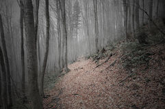 Mountain forest. Royalty Free Stock Images