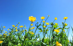 Mountain forest and flowers under blue sky. Beautiful mountain forest and flowers under blue sky Stock Images
