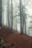 Mountain forest in fog Royalty Free Stock Image