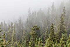Mountain forest in fog Stock Images