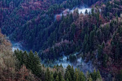 Mystic mountain forest fog ascending. Aerial view over a mountainside forest in winter in the Austrian Alps with fog ascending Stock Photo