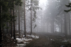 Mountain forest in a fog illuminated by sunlight. Stock Photos