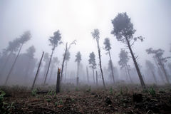 Mountain forest in fog Stock Photography