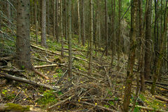 Mountain forest after hurricane Stock Image