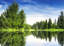Mountain Forest with Lake Landscape Stock Photo