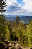Mountain Forest Landscape. A forest mountain landscape looking over the horizon Stock Image