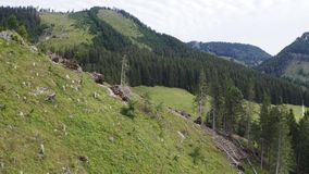 Alps aerial landscape. Mountain and forest landscape aerial view in Alps with slash zone and road stock footage