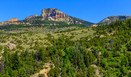 Mountain Forest Landscape Bighorn Stock Photo