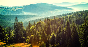 Mountain forest landscape Stock Photo