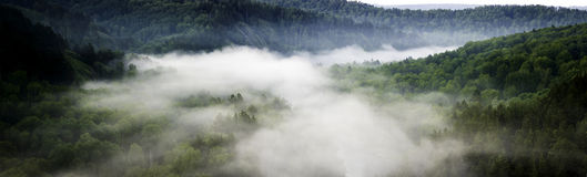 Mountain forest landscape. Pine trees in the fog in the early morning. Panoramic picture Royalty Free Stock Images