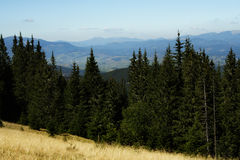 Mountain forest landscape. view from above Royalty Free Stock Photos