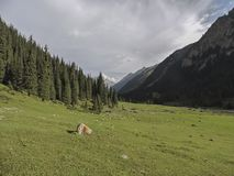 Mountain forest landscape. Wild life. Summer. Arashan gorge. royalty free stock photography