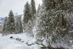 Mountain forest in late winter. Snow in a mountain forest at the end of winter Stock Photography