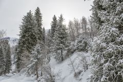 Mountain forest in late winter. Snow in a mountain forest at the end of winter Royalty Free Stock Image