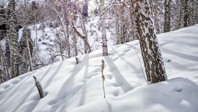 Mountain forest in late winter. Snow in a mountain forest at the end of winter Royalty Free Stock Images