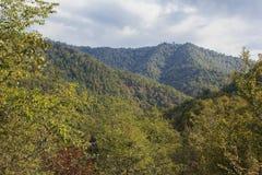 Mountain forest in Massali Stock Photos