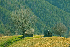 Mountain forest meadow and shepherd cottage Stock Image