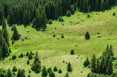 Mountain forest and meadow summer landscape Royalty Free Stock Photos