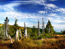 Mountain Forest Meadow Summer Scenic Sky. Mountain forest and meadow in summer. Scenic sky Royalty Free Stock Photography