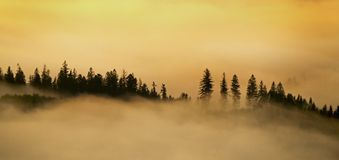 Mountain forest in the morning fog royalty free stock photography