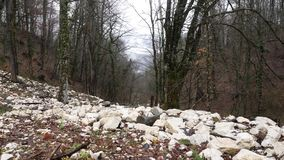 Mountain forest with mossy trees. Stone slopes with fallen leaves of autumn forest in cloudy weather. Beautiful stock video footage