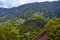 Mountain forest - Naran Kaghan valley, Pakistan Stock Image